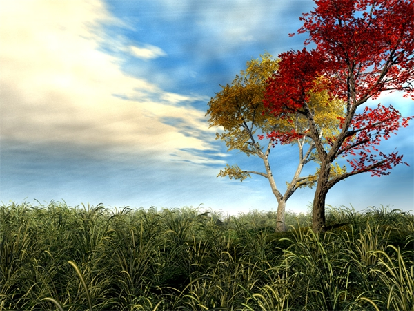 Free 3d Beautiful Autumn Scenery Computer Wallpaper Clean Beautiful Leaves And Sky 1600*1200(7)